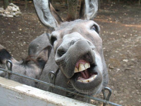 ugly-donkey